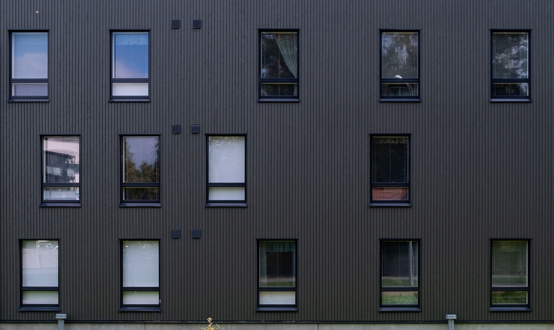 Osmankäämin ja Järvikaislan monimuotoiset ikkunasommitelmat